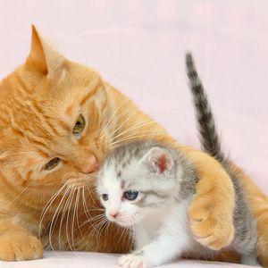 Chat toujours aussi mignon